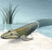 Bằng chứng cho thấy con người tiến hóa từ cá