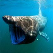 10 loài động vật biển dài nhất