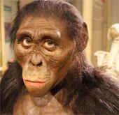 Hóa thạch tiết lộ khả năng tồn tại chủng người mới