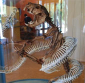 Những động vật tuyệt chủng bị con người lãng quên