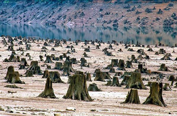 Chùm hình ảnh gây sốc về môi trường bị tàn phá trên hành tinh