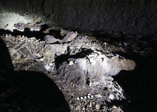 Phát hiện 8 triệu xác ướp chó trong mộ thờ thần Ai Cập cổ đại