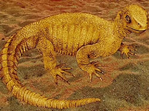 Hóa thạch loài rùa chưa từng được biết đến