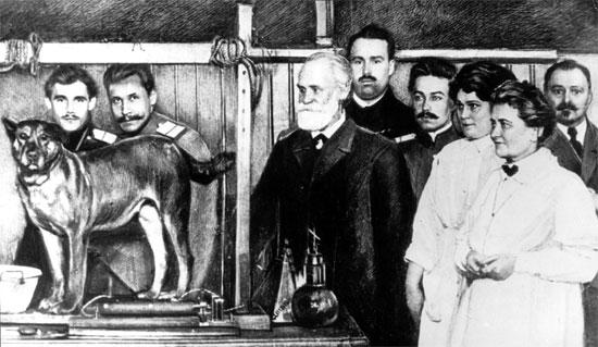 """3 chú chó """"huyền thoại"""" trong lịch sử thế giới"""