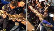 Kinh hoàng phát hiện con trăn dài 8 m trong khách sạn ở Bangkok