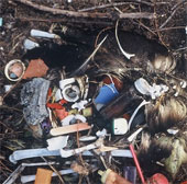 Chim biển sẽ chết dần vì nuốt rác nhựa