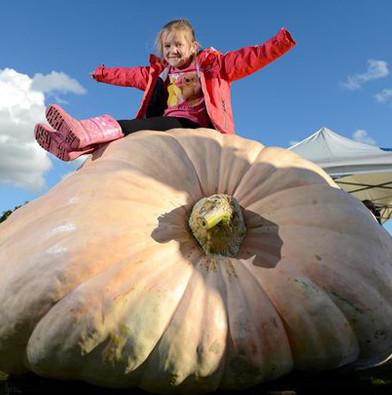 Bí ngô khổng lồ nặng hơn 850kg