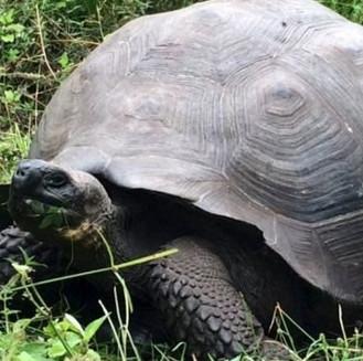 Phát hiện loài rùa khổng lồ mới trên đảo Galapagos