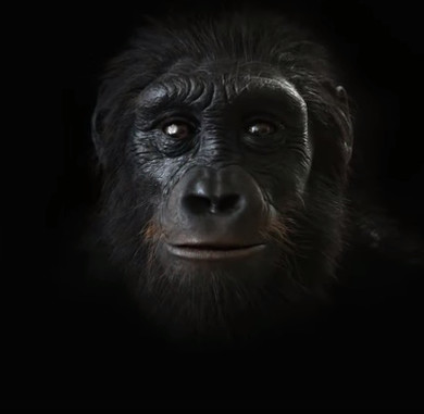 Quá trình mặt người tiến hóa dài 6 triệu năm chỉ trong 1 phút