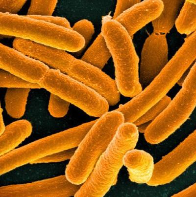 """Vi khuẩn có thể lây lan gene """"nhờn"""" thuốc kháng sinh cho nhau"""
