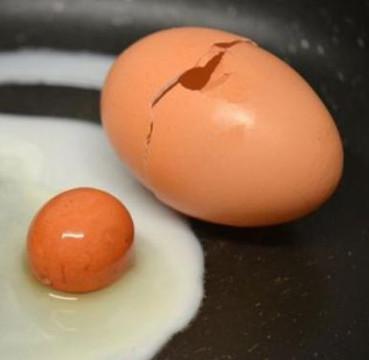 """Tròn mắt thấy """"trứng lồng trứng"""" cực hiếm"""