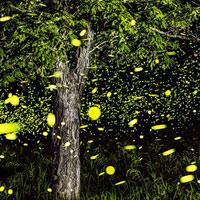 Chiêm ngưỡng những bức ảnh phơi sáng tuyệt đẹp về đom đóm