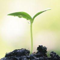 Thực vật có ý thức hay không?