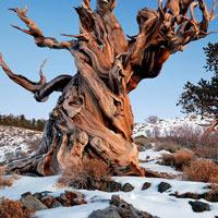 10 khu rừng cổ xưa nhất trái đất