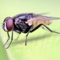 Có nên vứt bỏ thức ăn ngay khi có ruồi đậu vào?