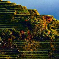 Các ruộng bậc thang tại Philippine Cordilleras