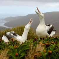 Các hòn đảo nằm gần Nam Cực của New Zealand
