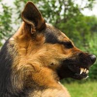 Loài chó thực sự có thể hiểu được cảm xúc của con người