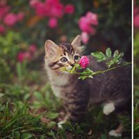 18 sắc thái thưởng hoa lãng mạn không ngờ của động vật
