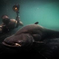 11 loài cá khổng lồ có nguy cơ tuyệt chủng