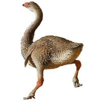 Loài chim khổng lồ ở Australia tuyệt chủng do bị săn bắt quá mức