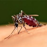 Cách diệt muỗi nhanh trong 10 phút