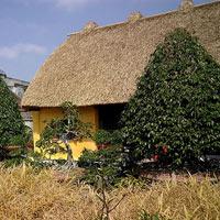 Những ngôi nhà mái rạ ở 'thủ phủ' gạo tám Nam Định