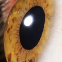 DNA của tảo có thể giúp người khiếm thị thấy được ánh sáng