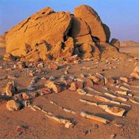 Thung lũng cá voi - Di sản thiên nhiên thế giới tại Ai Cập