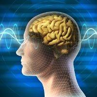 Sóng Gamma và nguồn gốc của những ý tưởng đột phá