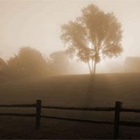 7 loại sương mù thường gặp trong tự nhiên