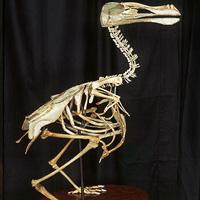 Kinh ngạc ngắm các tác phẩm điêu khắc từ xương gà ăn thừa