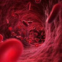 Cơ thể con người chứa bao nhiêu máu?