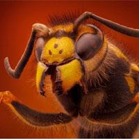 """Ngắm các loài côn trùng """"đội lốt quái thú"""""""