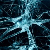 """Đột phá: Tìm ra phương pháp """"thay não"""" để điều trị các bệnh về thần kinh"""