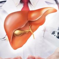 Chìa khóa ngăn ung thư đại tràng tấn công gan