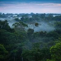 """Những điều bí ẩn trong rừng Amazon khiến bạn """"hết hồn"""""""