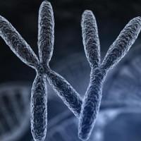 Virus thượng cổ có thể làm tăng tỷ lệ sinh con trai