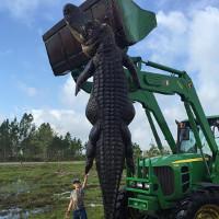 Choáng với cá sấu khổng lồ dài 4m