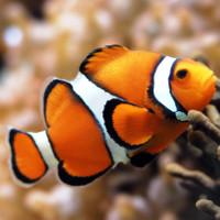Chiêm ngưỡng 4 loài cá đặc biệt nhất thế giới