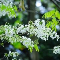 Hà Nội và những mùa hoa đẹp đến đắm say lòng người