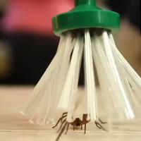 Video: Phát minh đột phá ra cây bắt nhện