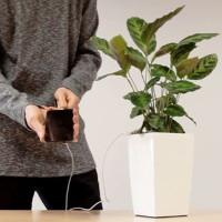Ngỡ ngàng với phát minh mới sạc điện thoại bằng cây xanh