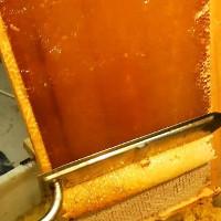 Video: Cách mật ong được thu hoạch