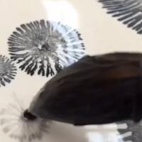 Video: Trang trí đồ gốm tuyệt đẹp bằng phản ứng hóa học