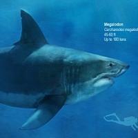 Tìm bí ẩn khiến loài cá mập lớn nhất thế giới tuyệt diệt
