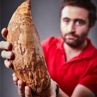 Phát hiện chiếc răng 5 triệu năm của cá voi sát thủ khổng lồ