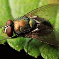 Ruồi, bọ chét cũng có ý thức và duy kỷ