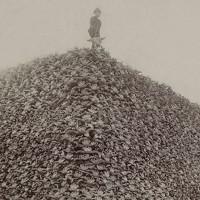 Núi xương sọ phơi bày cuộc đại thảm sát bò rừng bizon