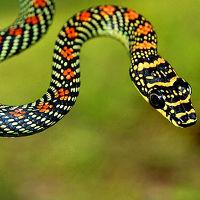 Những điều thú vị về rắn
